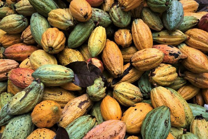 Cocoa Barometer 2020: