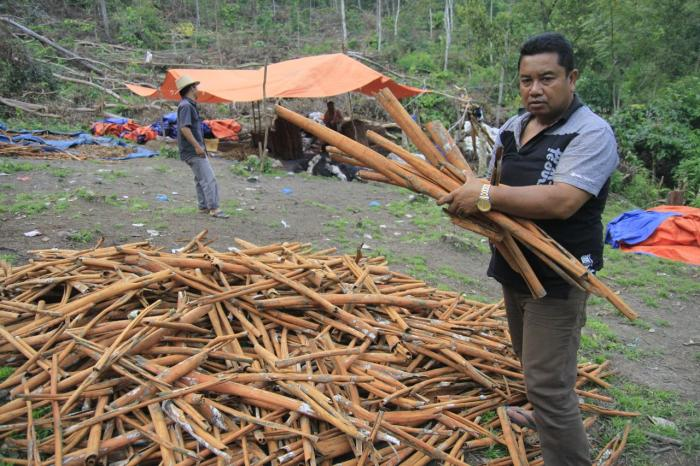 Kaneel uit Kerinci, Sumatra in Indonesië