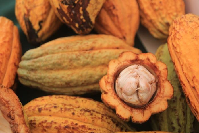 Cacao van topkwaliteit uit Ecuador