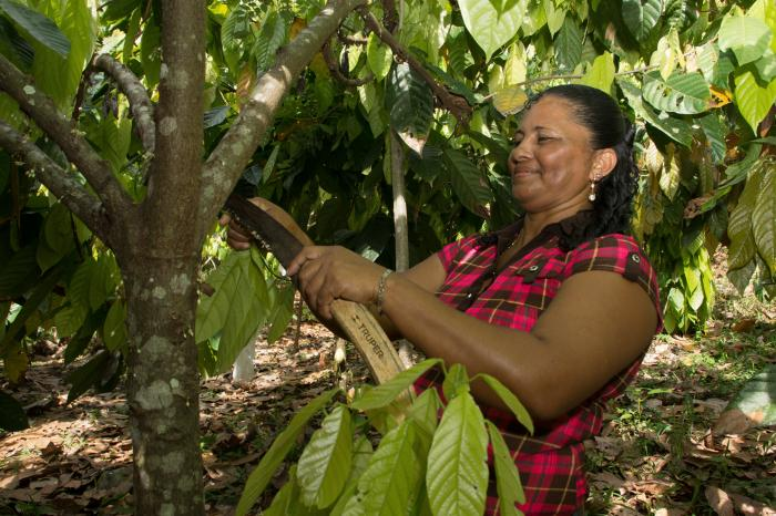 Harvesting knowledge on cocoa in Central America