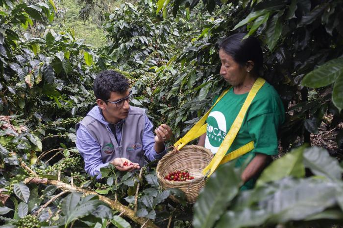 Peruvian coffee, among the best of South America