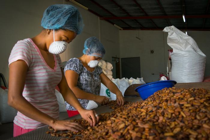 Cacao deliciosamente sostenible