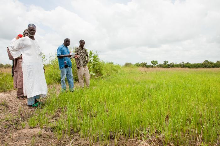 Senegalese rijst op eigen benen