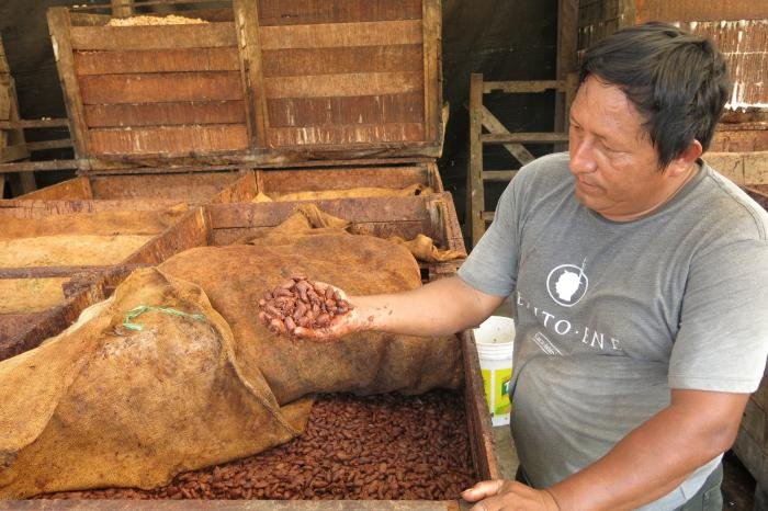 High quality Peruvian cocoa for fine chocolates