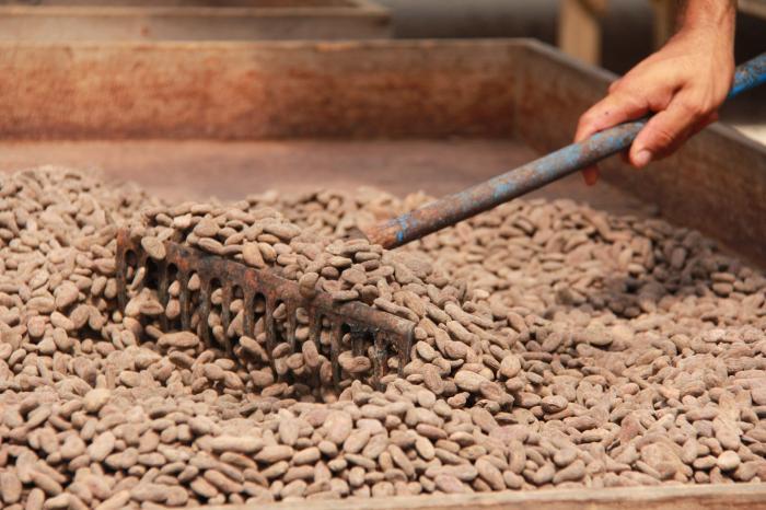 Fortaleciendo la Cadena de Valor de Cacao de Calidad en Olancho