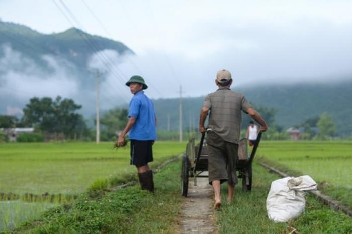Rijst voedt de toekomst van Vietnam