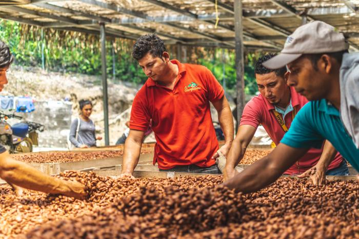 Deliciously sustainable cocoa