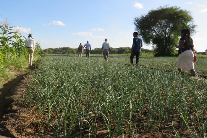 Inclusive & future-proof vegetable and fruit businesses in Tanzania's Southern Highlands