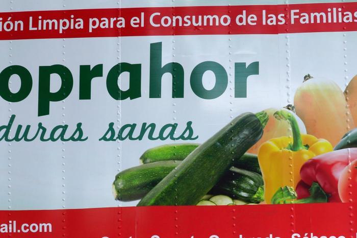 Producción de hortalizas en Matagalpa - COMPLETADO
