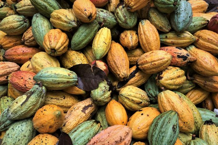 Taking Ivorian cocoa to the higher level
