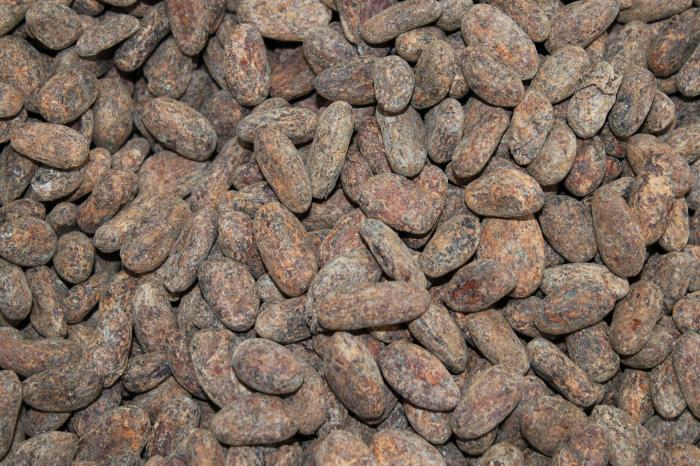 Cacao uit Waslala, Nicaragua [Voltooid]