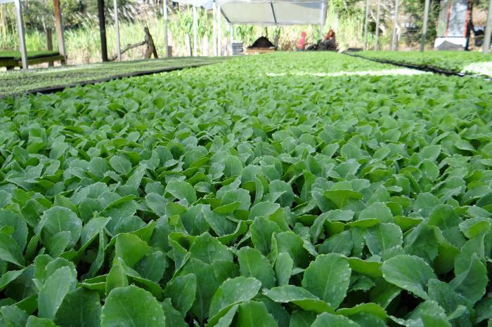 Groenten in Jinotega, Nicaragua [Voltooid]