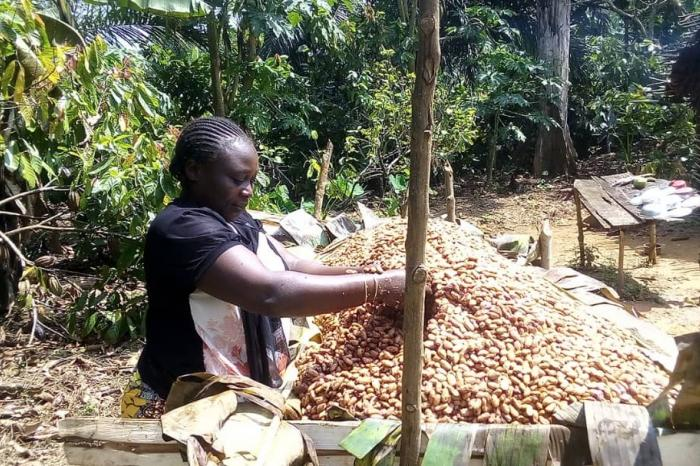 Cocoa-growers in Ituri are positioned on the fine flavour cocoa market
