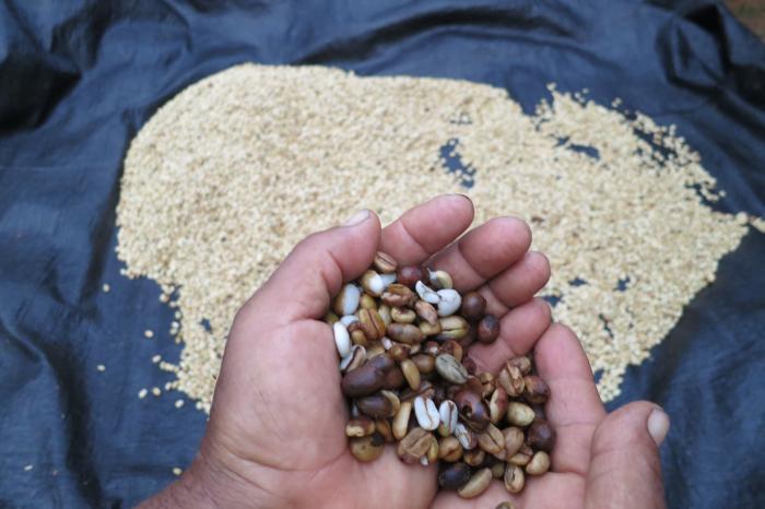 Koffie en cacao, San Martín, Peru [Voltooid]