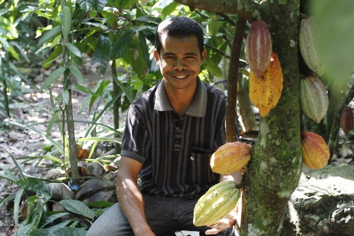 Cocoa in Flores, Indonesia