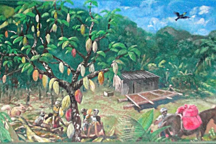 Cacao de Waslala, Nicaragua - PROYECTO FINALIZADO