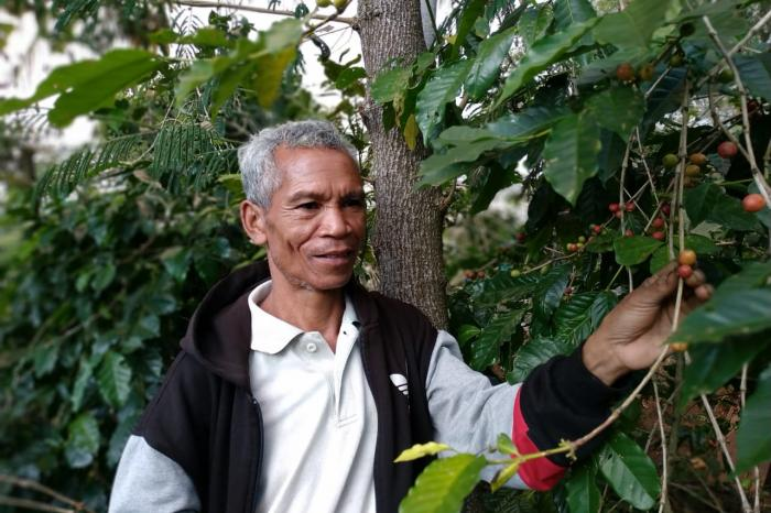 The unique varieties of Flores coffee
