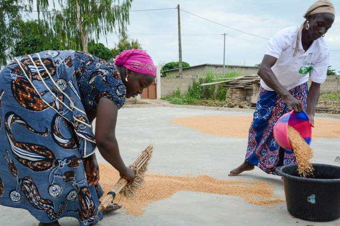 Rikolto's Rice Cluster: Pushing for sustainable rice sector transformation