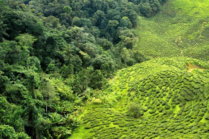De koffieboeren van Jambi beschermen hun regenwoud