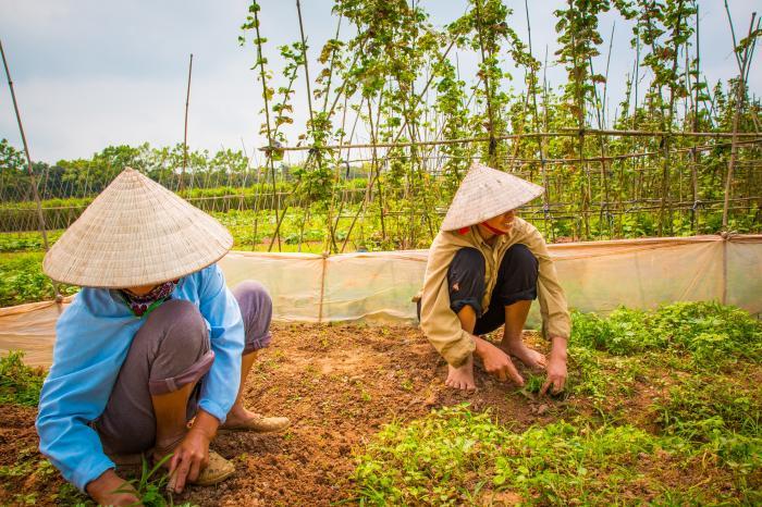 VegMap: Veilige en Biologische groenten in Hanoi op de kaart