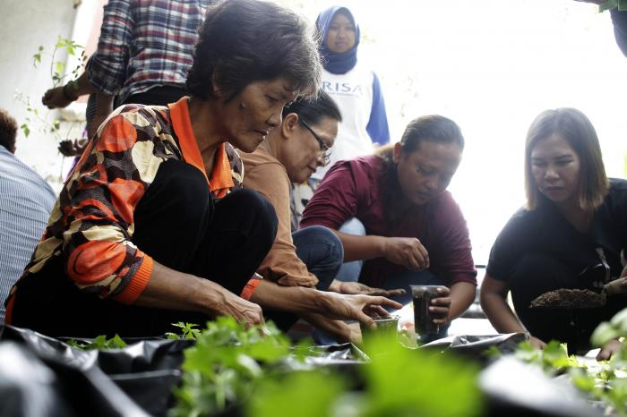 Healthy and sustainable food for Indonesian cities