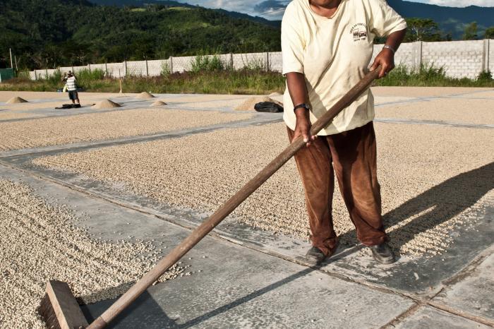 El café peruano entre los mejores de la región