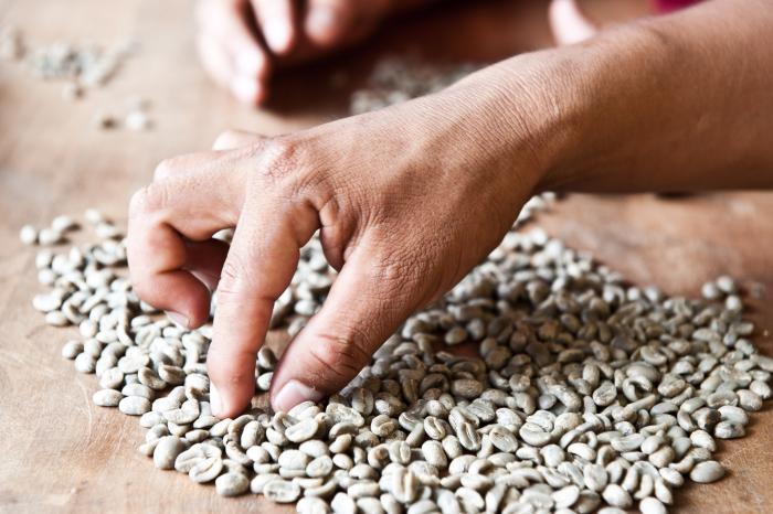 Koffie en Cacao in Junin, Peru [Voltooid]