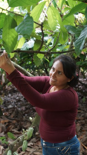MOCCA: a recipe for maximizing opportunities for cacao in the Americas