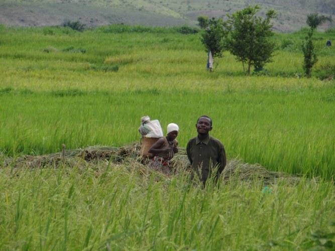 Ontdek het rijstprogramma & Investeer