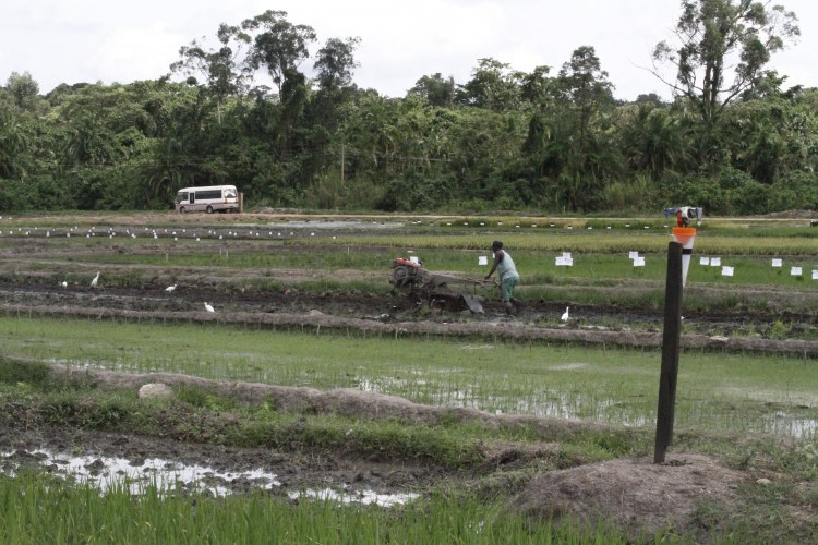 Doho rice scheme