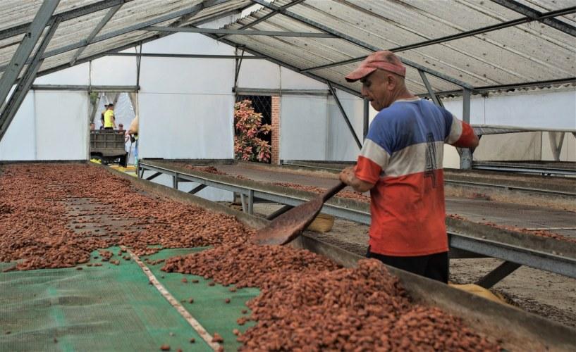 Secando granos de cacao en Fortaleza del Valle.
