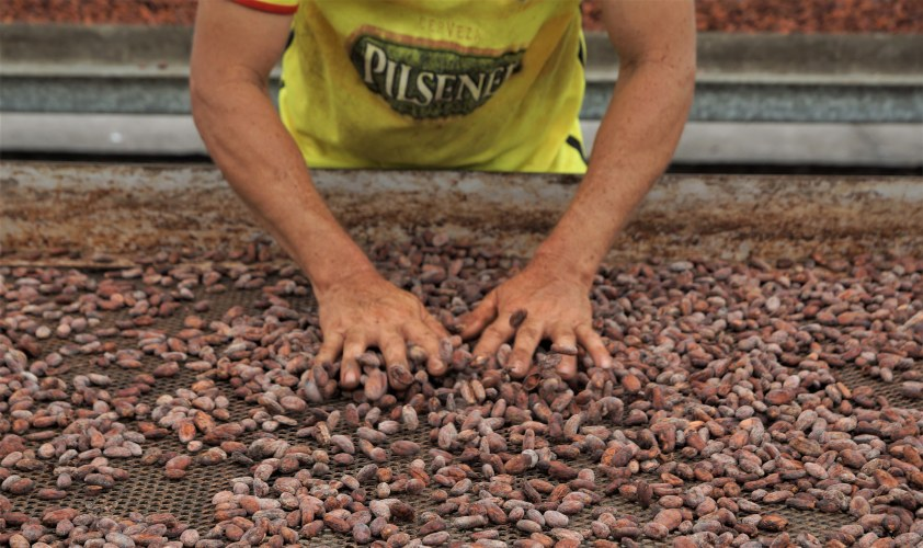 Fortaleza del Valle drying cocoa beans