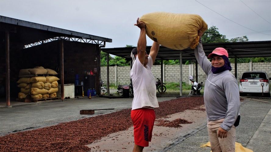 Moviendo una bolsa de cacao en UNOCACE.