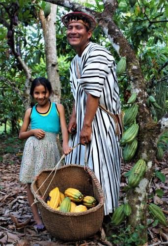 Cac Pangoa cocoa pod harvest