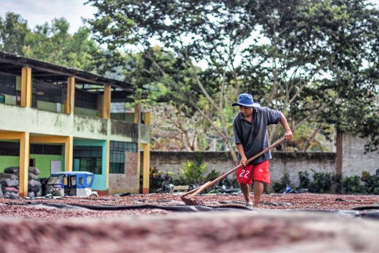 Cac pangoa stirring cocoa beans