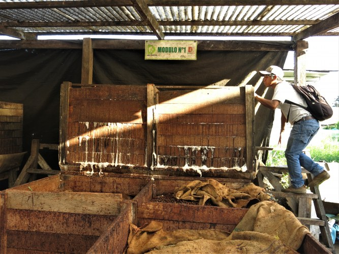 CAC Pangoa fermentation boxes