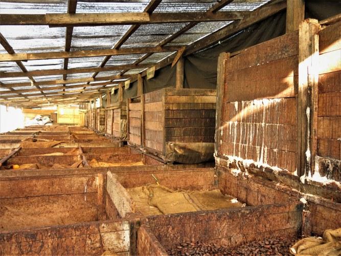 CAC Pangoa cocoa fermentation boxes