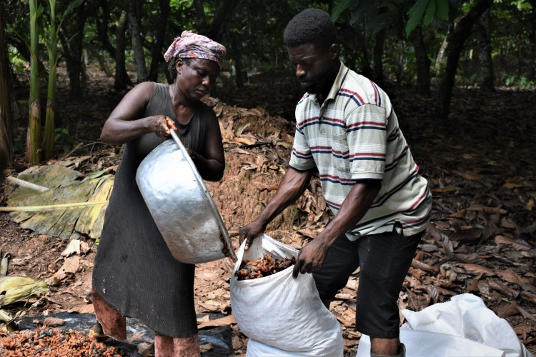 KK Ama Anto - filling fermented beans into sacks with help from neighbour