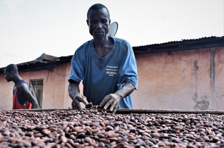 KK drying cocoa beans