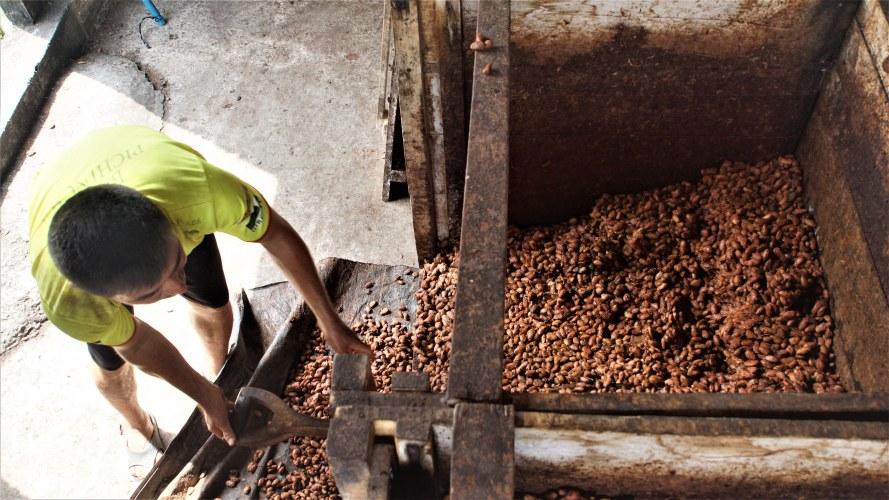 Vaciando la caja de fermentación en Fortaleza del Valle.