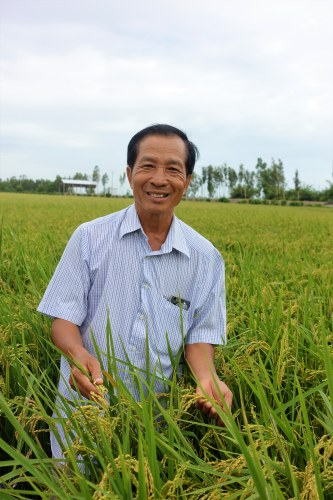 An Giang rice famers