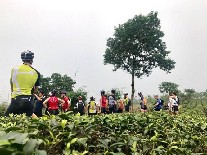 Vietnam Classic tea fields