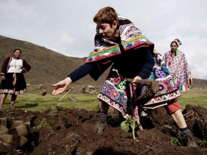 Cosechando papas nativas en la comunidad de Paru-Paru, valle sagrado