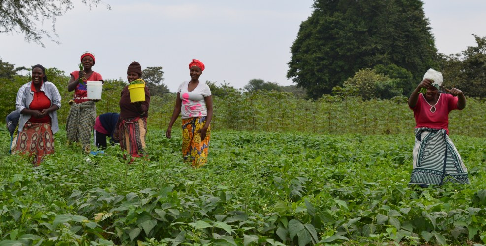 Fresh Fruits and Vegetables in Arumeru, Tanzania | Rikolto