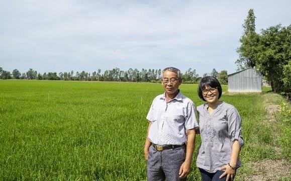 Nông dân hợp tác với tư nhân trong chuỗi lúa gạo