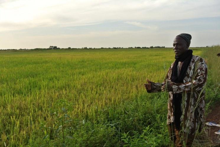Senegal Rice Field