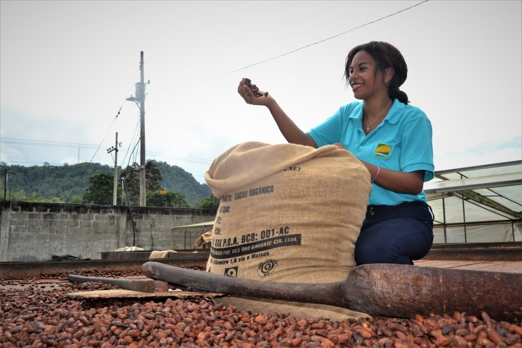 UOPROCAE girl filling the sack of cocoa beans