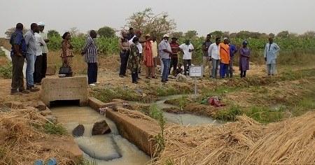 Visite commentée de parcelles de riz à Bagré