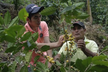 For many Ecuadorian farmers, making a living out of coffee is difficult. Production costs are higher than any other crop in Latin America.